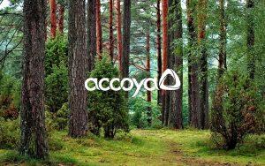 Accoya timber