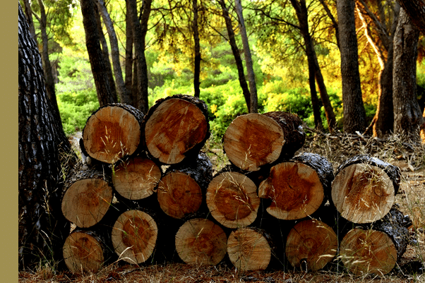 Sustainably sourced wood